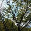 散歩ー太陽と鉄ー令和元年9月16日(月)晴れ