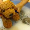 2016/8/15 犬を洗う