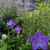 「和」の花