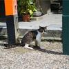 【一日一枚写真】八坂神社の招き猫 Part.2【一眼レフ】