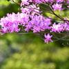 飛び立つ冬鳥たちに感謝を込めて ~恩田川ほか~ 野鳥撮影《第69回目》