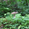 ◆'18/07/08      獅子ヶ鼻湿原&元滝④…鳥海マリモは どうなってる?