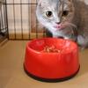 年齢に合った猫の食事(前編)