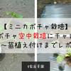 【家庭菜園】ミニカボチャの空中栽培にチャレンジ!畝立て~苗植え付けまでレポート!