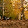 神宮外苑いちょう並木からの新宿御苑で秋を見つける【2018.11.24】