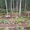 森の眺めを遮る植樹