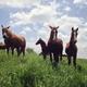 自由に駆られ、馬、草原に駆ける