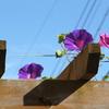 終わりゆく花 始まる花