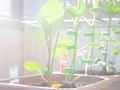 【ベランダ菜園2】北向きベランダの日当たり問題