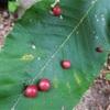 レポート8 虫と植物の共生について