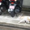 7/6木曜日・ゴールが~