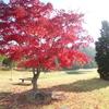 紅葉真っ盛りです。