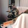 【猫】ちょこのモーニングルーティン。
