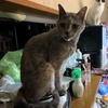御朱印集め 猫の気持ち33(自宅にて)
