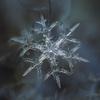 自然の紋章画家!鮮明すぎる雪の結晶