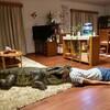 映画『家に帰ると妻が必ず死んだふりをしています。』前半良いのに後半失速する。評価&感想【No.499】