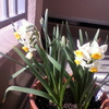 今が盛りの花たち