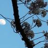 「冬の櫻」全面改訂にあたって  VOL.67