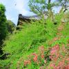 萩の花と秋の風と