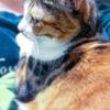 【愛猫日記】毎日アンヌさん#117