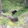 2016年夏アメリカ西部国立公園子連れ旅行記⑦〜野生動物編
