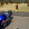 都井岬に馬を見に行くツーリング
