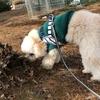 お散歩中の犬同士の付き合い方とマナー<2>~「(イヌ)ダメですか?」はありですか?