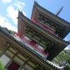 【仙台】菖蒲の名所!輪王寺の庭園を見てきたよ