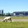 立川の除草ヤギは8月で終了。夏休みおすすめの無料癒しスポット