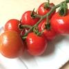 フルティカとシンディ オレンジは収穫の季節へ