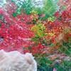 オゥチで紅葉を愛でる✨🍁(*˘ー˘*)