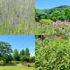たくさんのハーブを見て香りを楽しめる無料施設!!栃木県佐野市のみかもハーブ園におでかけ