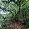 九州ツーリング2020【5】西平椿公園(ラピュタの木)、崎津教会、針尾空中展望トイレ