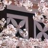 凱旋桜とゆば料理