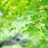 ここちよい緑がいっぱいの名古屋市「東山植物園」へおでかけ