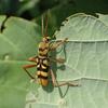 かっこいい日本の甲虫7選!カブトムシだけじゃない魅力的な昆虫たち
