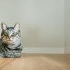 【譲渡会】猫の譲渡会に予約をしてみた