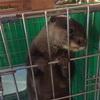 【国際通り】アウルの森 保護動物園に行ってきました!【店レポ・写真多数あり】