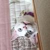 風邪で寝込んだ時の、猫のトイレがツラすぎる