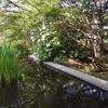 紫陽花のきれいな公園(滝の思ひ出)