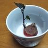 さつまいもで実験 可愛い葉っぱに癒される トマト アボカド 青じそは本当に役に立ちます