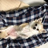愛犬のお腹見せ✨✨麿ピョン無防備🐶幸せの証⁇