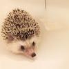 今日はお風呂