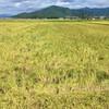 完全無農薬有機栽培米「コシヒカリ」の稲刈りがはじまったことと『ワルツ・フォー・デビー』と『グランド・ブタペスト・ホテル』