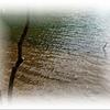 驚き桃の木山椒の木  ( ゚Д゚)