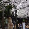 お花見は何処へ?東京方面で桜散歩なら・・・