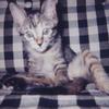 愛猫テリーの思い出2 -奇怪な事件-