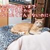ここに「全ての猫の日を祝おう会」発足をご報告致します