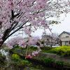 名残の桜と3つの出会い