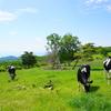 山の上のドッグラン【菅平牧場】日本のスイスへようこそ~♡
